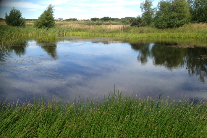 photo of pond