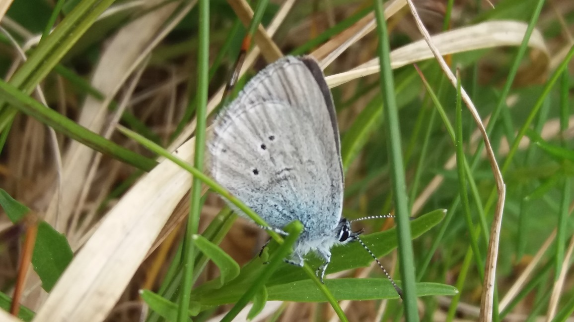 small blue photo